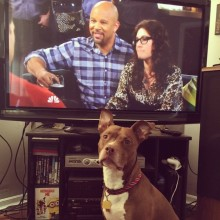 PIBBLes are watching One Big Happy!
