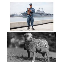 remembering and honoring our war dogs