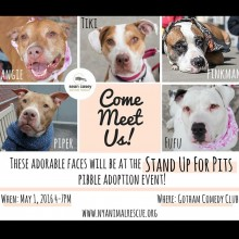COME MEET THESE PRECIOUS SOULS AT STAND UP FOR PITS MAY 1st!!
