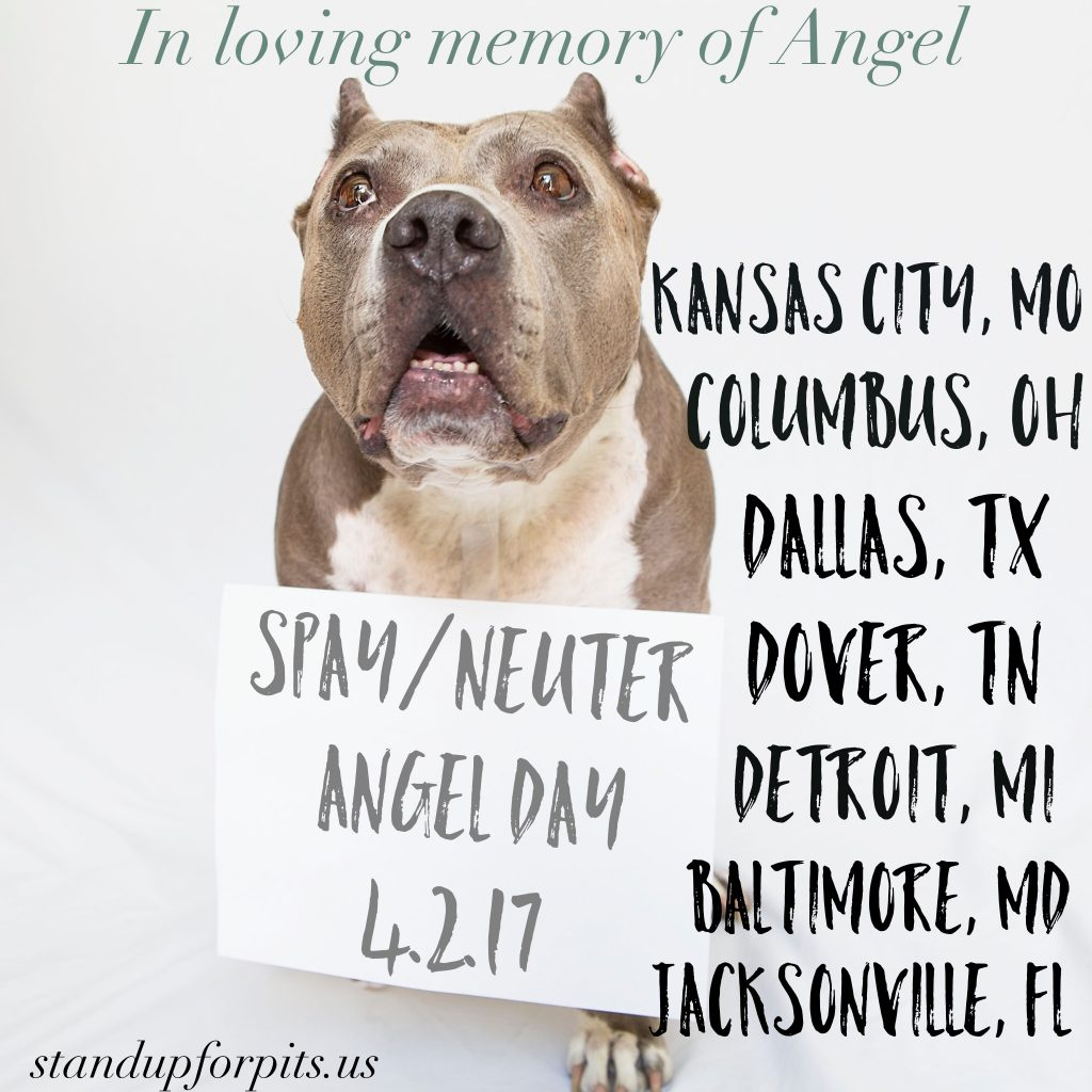 Spay/Neuter Angel Day